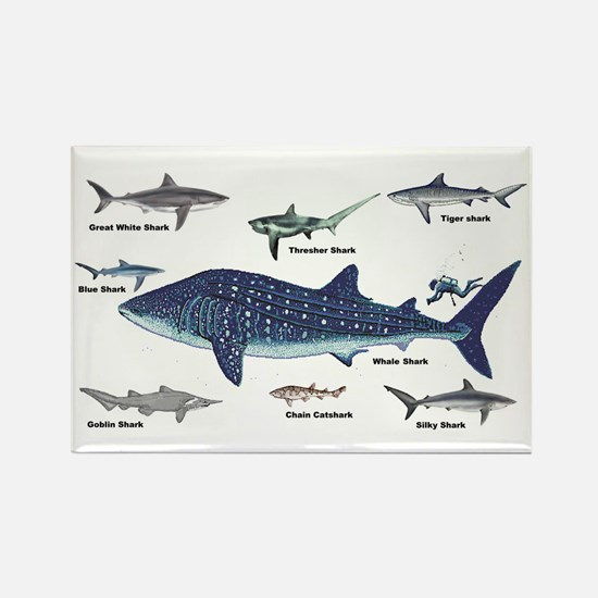 Shark Types Rectangle Magnet