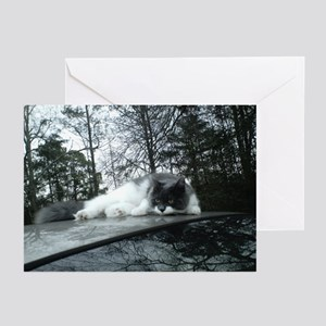 Reflection Kitty Greeting Cards (Pk of 10)