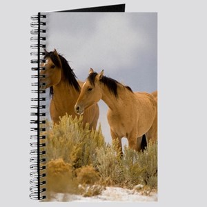 Buckskin Horses Journal