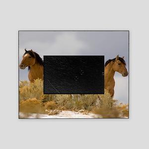 Buckskin Horses Picture Frame
