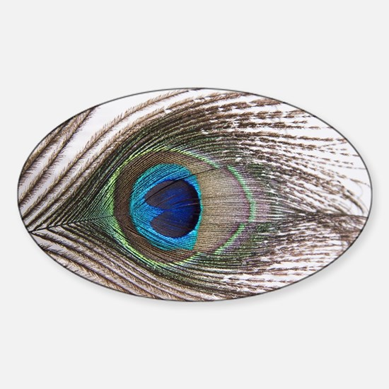 beautiful peacock feather Sticker (Oval)