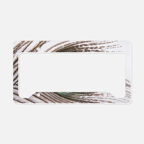 beautiful peacock feather License Plate Holder