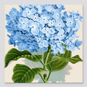 "Blue hydrangea flowers Square Car Magnet 3"" x 3"""