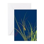 Blank Blue Grass Greeting Cards (Pk of 10)