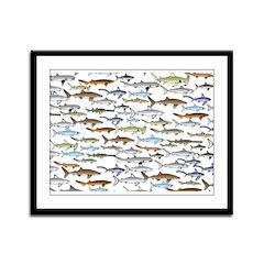 School of Sharks 2 Framed Panel Print