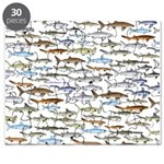 School of Sharks 2 Puzzle