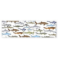 School of Sharks 2 Bumper Bumper Sticker
