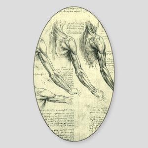 Male Anatomy by Leonardo da Vinci Sticker (Oval)