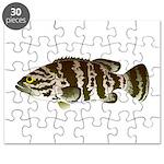Goliath Grouper Puzzle