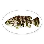 Goliath Grouper Sticker