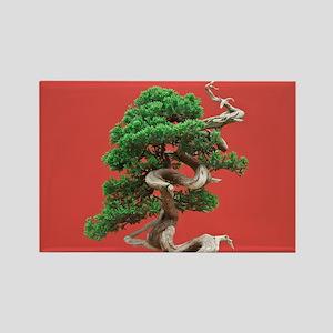 Juniper bonsai Rectangle Magnet