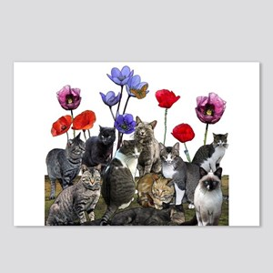 Cats and flowers Postcards (Package of 8)