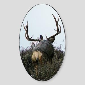 Monster buck deer rear Sticker (Oval)