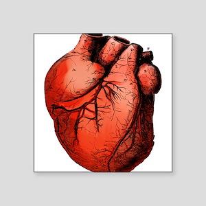 """heart-colored_tr Square Sticker 3"""" x 3"""""""