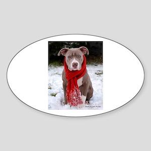 Winter Pit Bull Sticker (Oval)