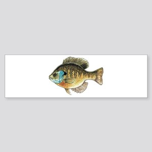 Bluegill Bream Fishing Bumper Sticker