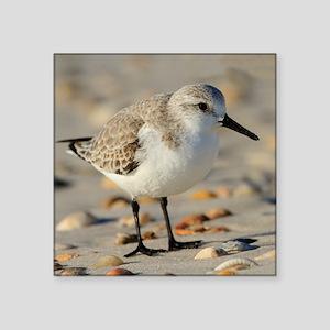 """Sand Piper and Seashells Square Sticker 3"""" x 3"""""""