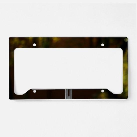 Stop Motor No Smoking License Plate Holder