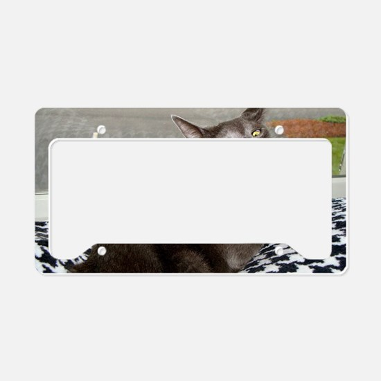 Russian Blue  upset cat License Plate Holder
