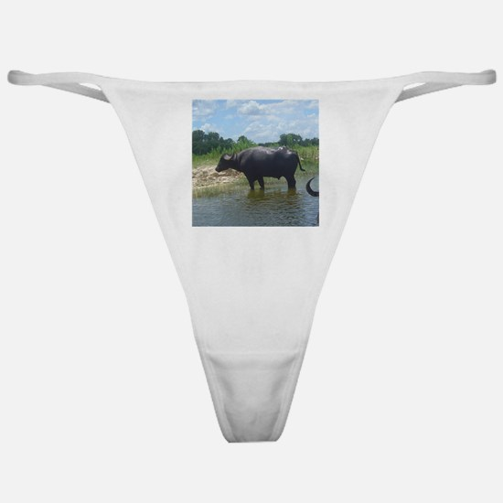water buffalo Classic Thong