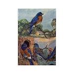 Bluebird Rectangle Magnet