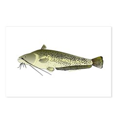 Wels catfish Postcards (Package of 8)