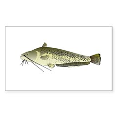 Wels catfish Decal