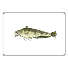Wels catfish Banner