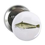 Wels catfish 2.25