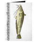 Wels catfish Journal