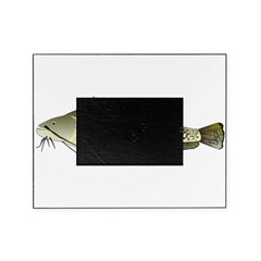 Wels catfish Picture Frame