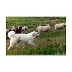 Great Pyrenees Mini Poster Print - Guarding Sheep