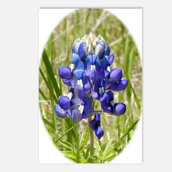 Texas Bluebonnet Postcards (Package of 8)