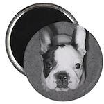 French Bulldog 2.25