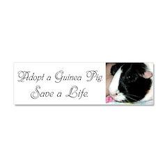 """""""Adopt a Guinea Pig. Save a Life."""" Car M"""