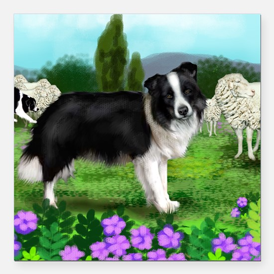 "border collie3 copy Square Car Magnet 3"" x 3"""