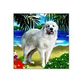 Great pyrenees Square