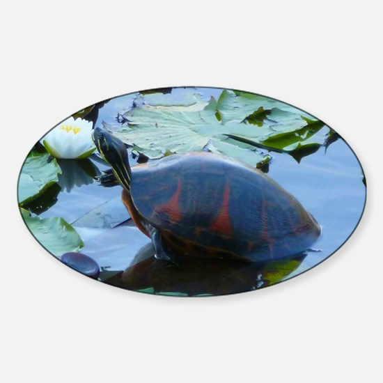 Florida Redbelly Turtle between tra Sticker (Oval)
