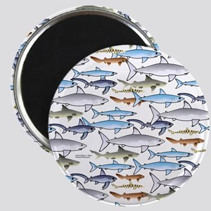 School of Sharks t Magnet