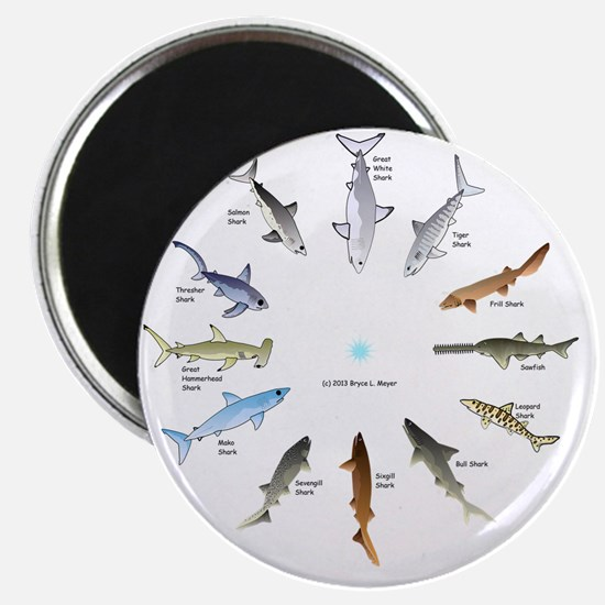 Shark Clock Two Magnet