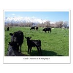Cattle at Pasture B Hanging R Small Poster