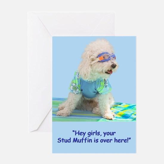 Bichon Frise Stud Mufffin Birthday Greeting Card