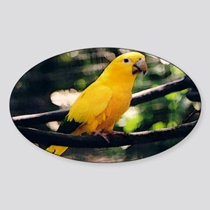 Golden Conure 2 Oval Sticker