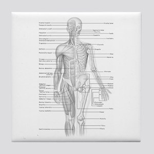 Human Anatomy Chart Tile Coaster