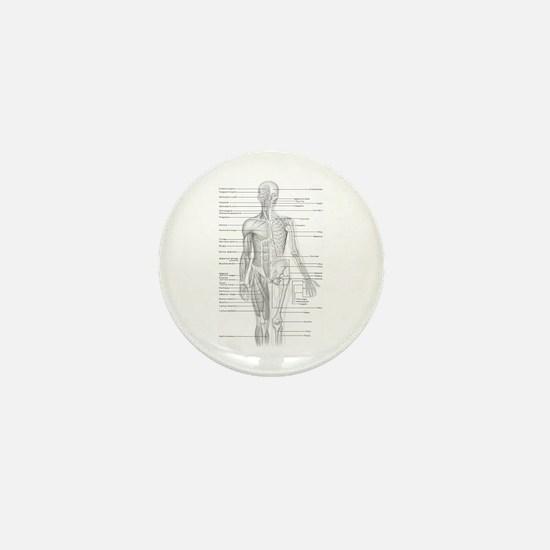 Human Anatomy Chart Mini Button