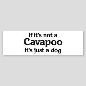 Cavapoo: If it's not Bumper Sticker