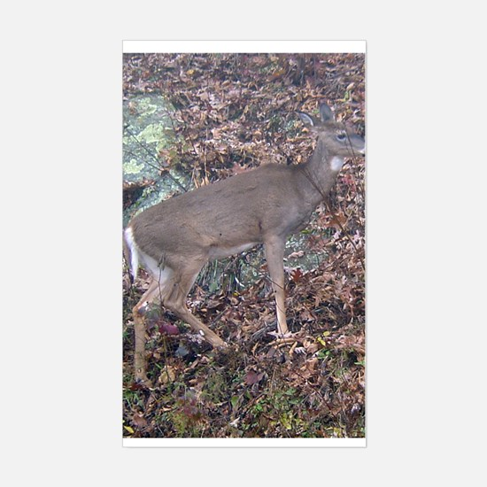 white tail doe Rectangle Decal