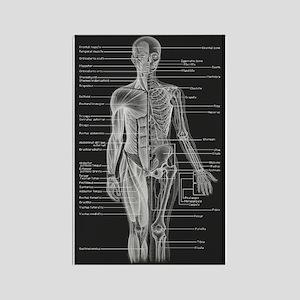 Human Anatomy Chart Rectangle Magnet