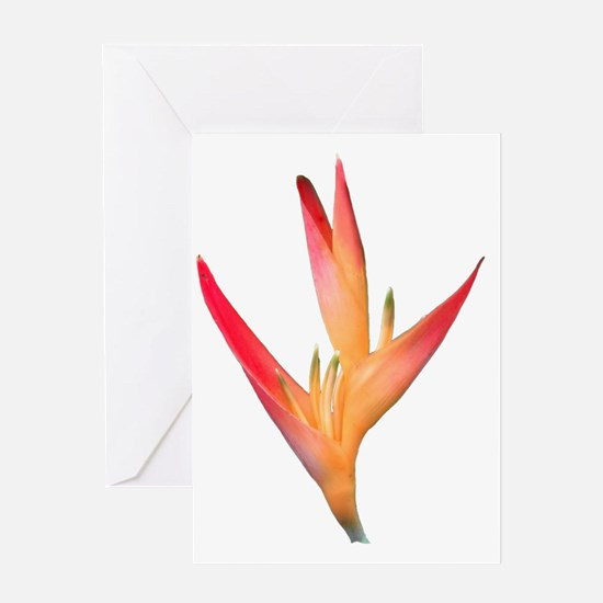 Bird of Paradise LG Greeting Card