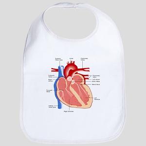 Human Heart Anatomy Bib